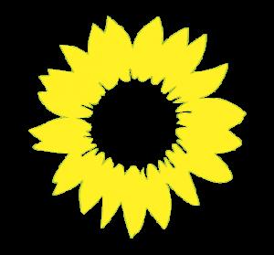 Sonnenblume transparent